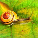Snail Farm – ingredienti, recensioni, prezzo, forum