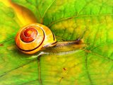 Snail Farm recensioni